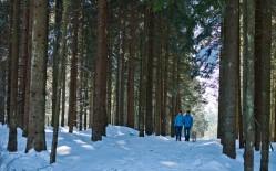 neureichenau-wandern-winter
